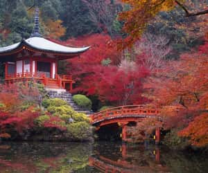 autumn, beauty, and tree image