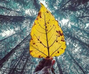 automn, fall, and forest image