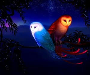 owl and night image