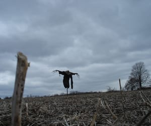 autumn, scarecrow, and field image