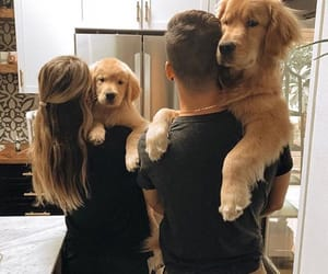 doggo image