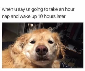 dog, funny, and nap image