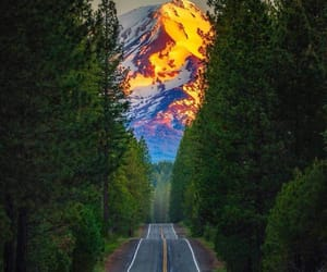 adventure, california, and forest image