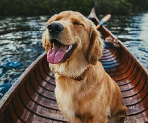 Animales, dog, and perro image