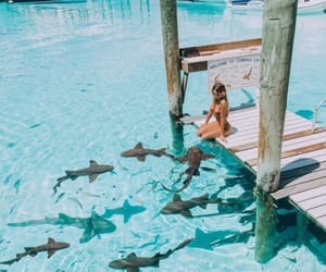 summer, shark, and ocean image