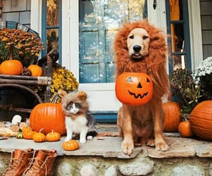 dog, cat, and Halloween image