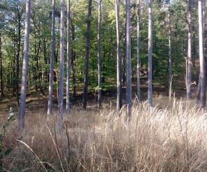 afternoon, beauty, and forest image