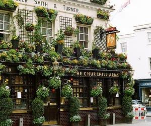 london, plants, and england image
