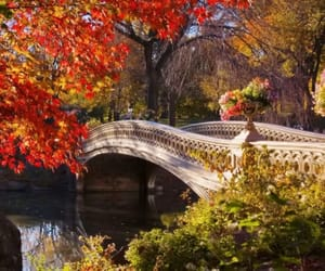 Central Park, fall, and new york image