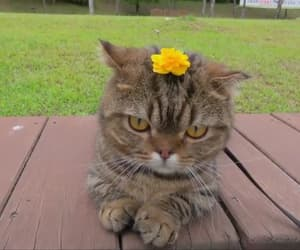 baby, cat, and flower image