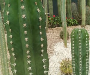 cactus, picture, and paisaje image