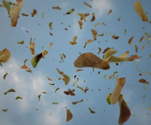 autumn, helicopter, and day image