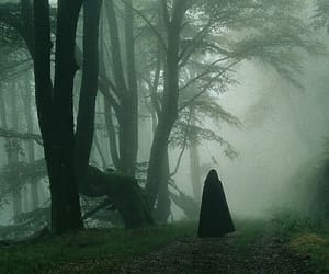 forest, dark, and fantasy image
