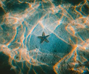 sea, starfish, and summer image