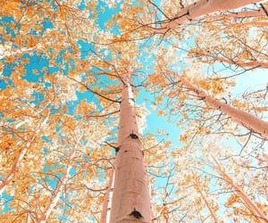 fall, autumn, and fall foliage image