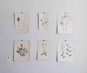 art, flowers, and plants image