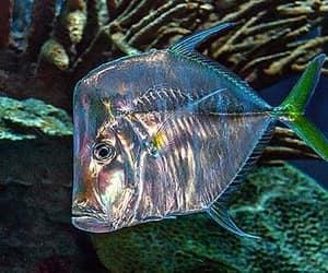 Animales, naturaleza, and pez image