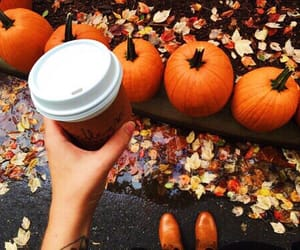 article, autumn, and pumpkins image
