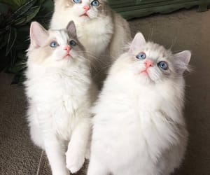 animals, beauty, and cats image