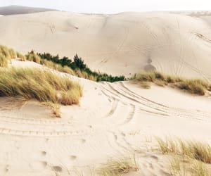 dunes, grass, and green image