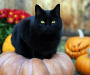 cat, Halloween, and black image