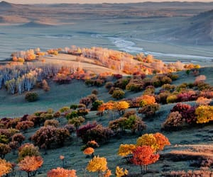 autumn, green, and orange image