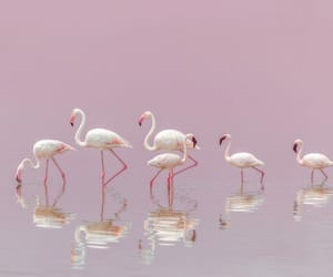 beautiful, pink, and flamingo image