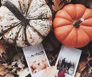 article, autumn, and blankets image
