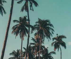 summer, palm trees, and landscape image