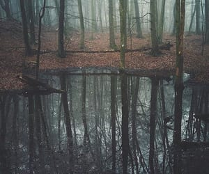 beautiful, forest, and woods image