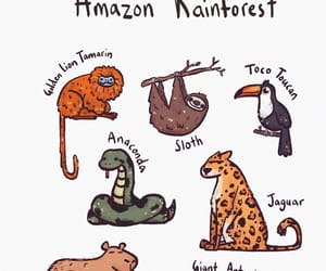 anaconda, animals, and anteater image