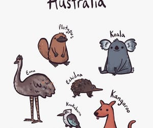 animals, art, and australia image