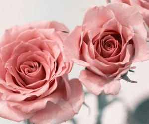 flower, pink, and pink flower image