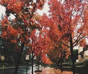 article, cozy, and autumn image