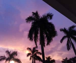 aesthetic, palm trees, and pink image