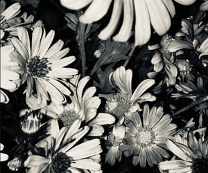 blackandwhite, flowers, and old image