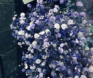 flower, flowers, and 紫色 image