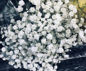 clean, flower, and flowers image