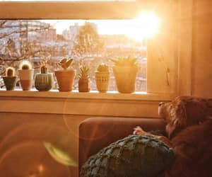 dog, succulents, and sunlight image