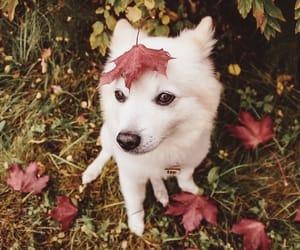 animal, dog, and leaves image