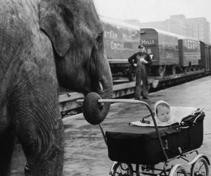 baby, elephant, and black and white image