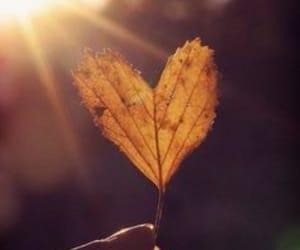 autumn, heart, and leaf image