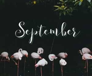aesthetic, September, and style image