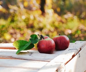 apple, apples, and autumm image