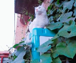 albino, cat, and cotton image