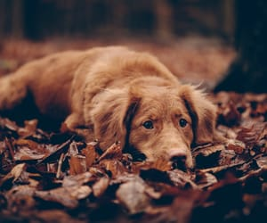 autumn colors, dog, and animal photography image