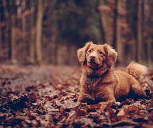 dog, leaves, and animal image