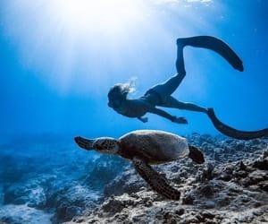 bikini, blue, and coral reef image