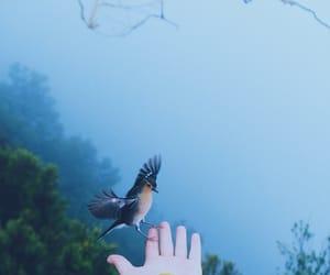 beautiful, bird, and photography image