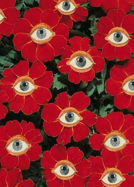 Flower\u0027s eyes uploaded by Manar Gamal on We Heart It